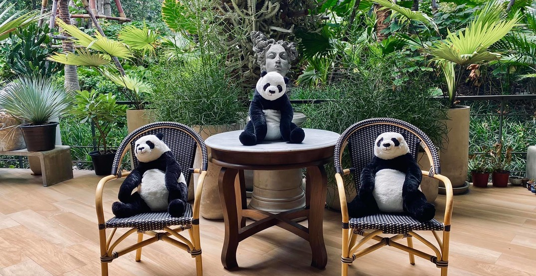 A restaurant in Thailand is using stuffed pandas for physical distancing