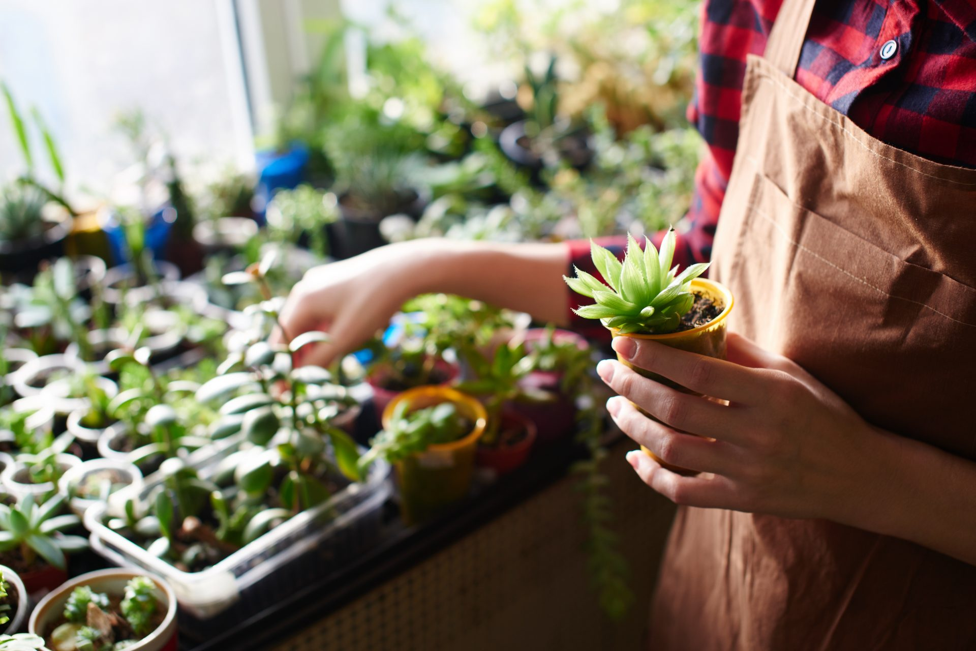 Local plant shops navigating supply shortages during pandemic