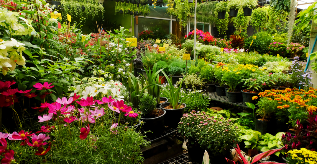 plant supply shortages