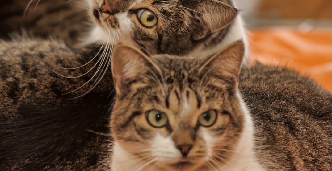 """88 cats surrendered to Ontario Humane Society after becoming """"overwhelming"""" to owner"""