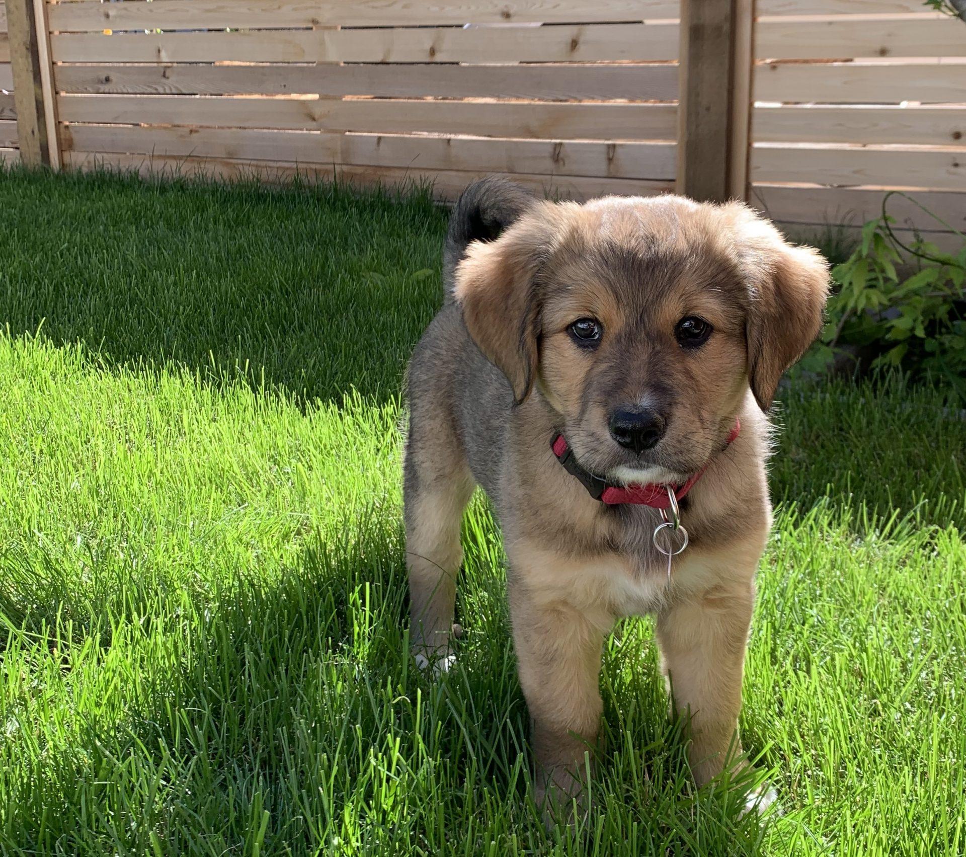 shelters dog adoptions
