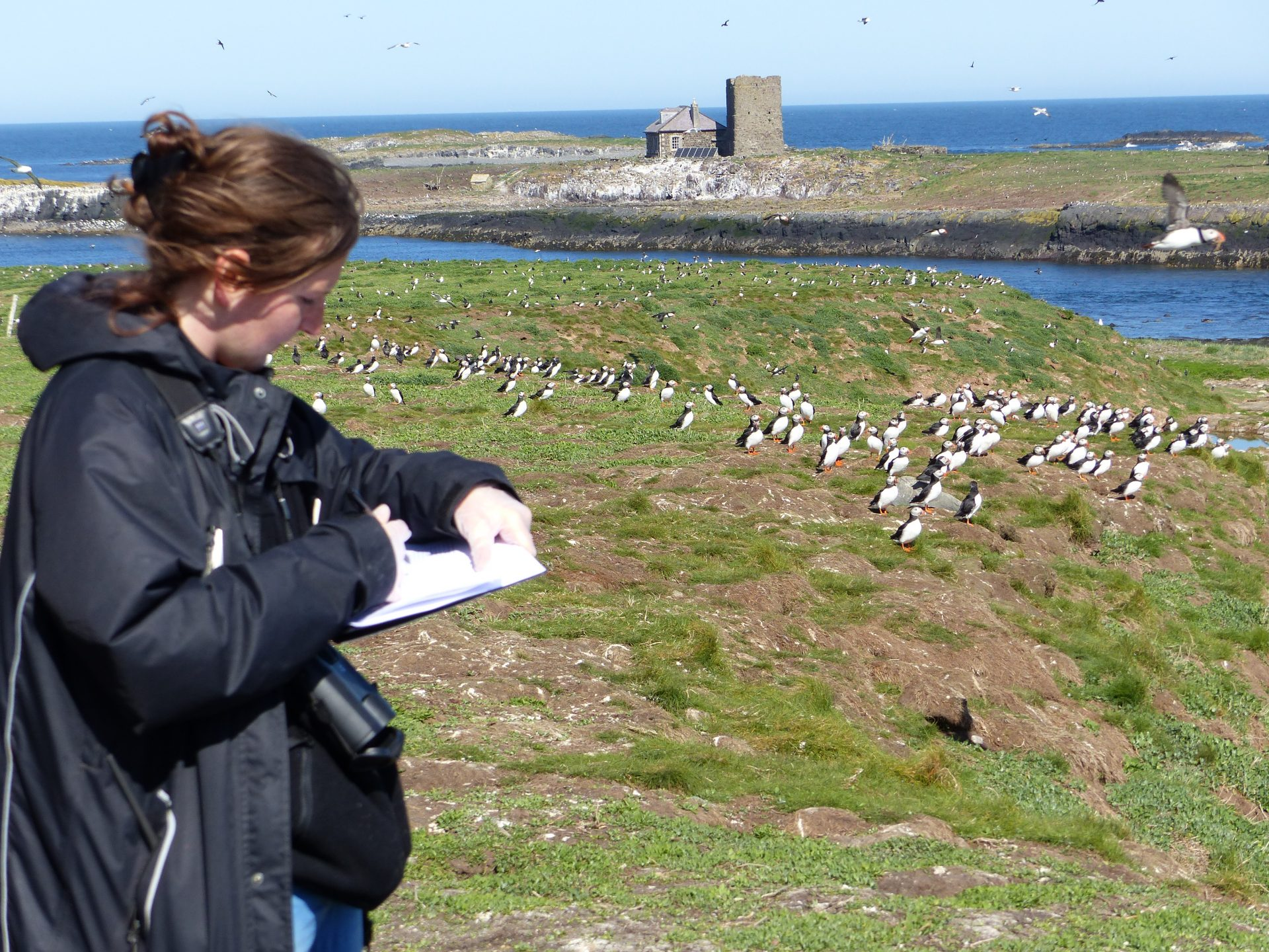 https://www.nationaltrust.org.uk/press-release/puffins-return-to-breed-on-the-farne-islands-in-strong-numbers