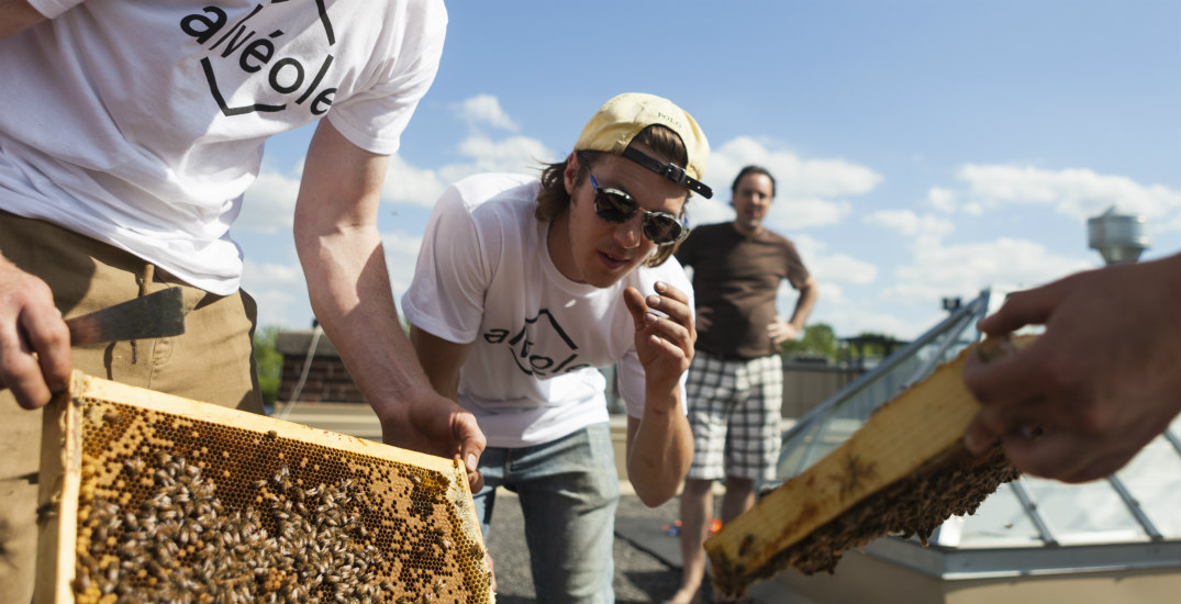 We took a look at Vancouver's newest rooftop bee haven (PHOTOS)