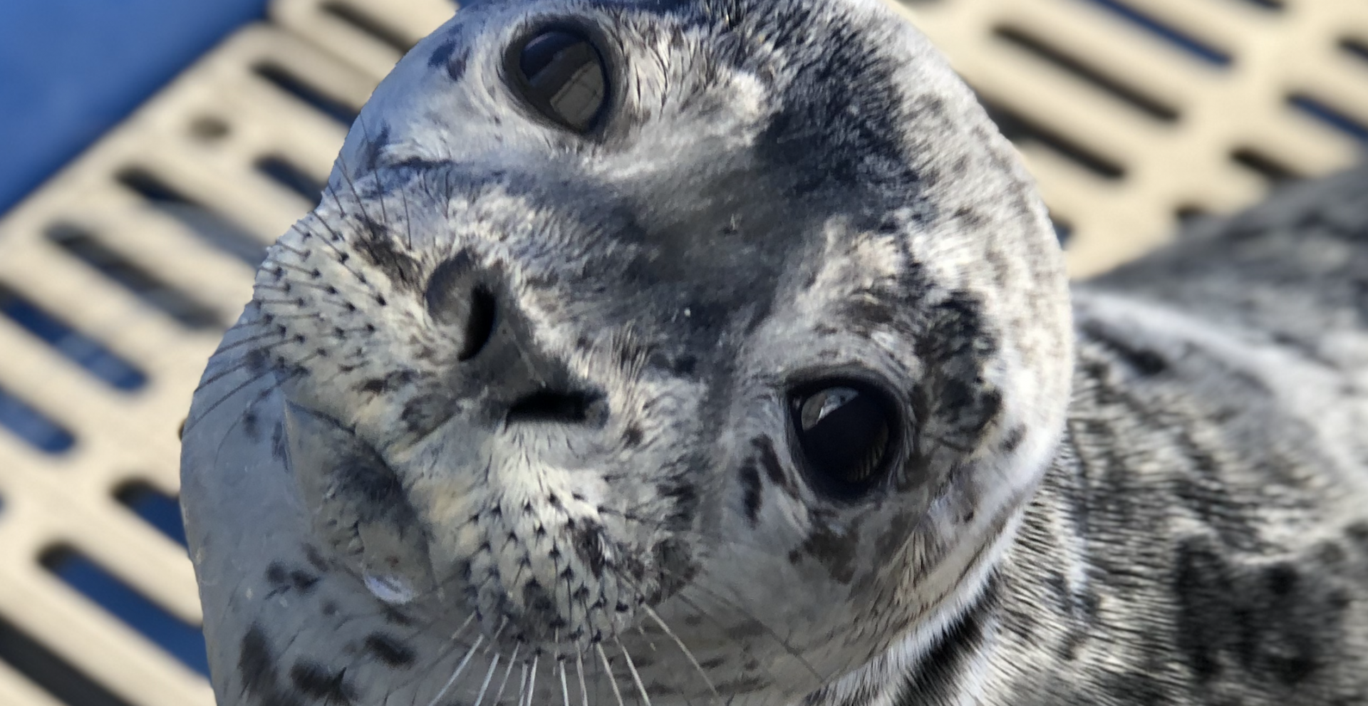 Daily Hive Readers: It's time to pick a name for your seal
