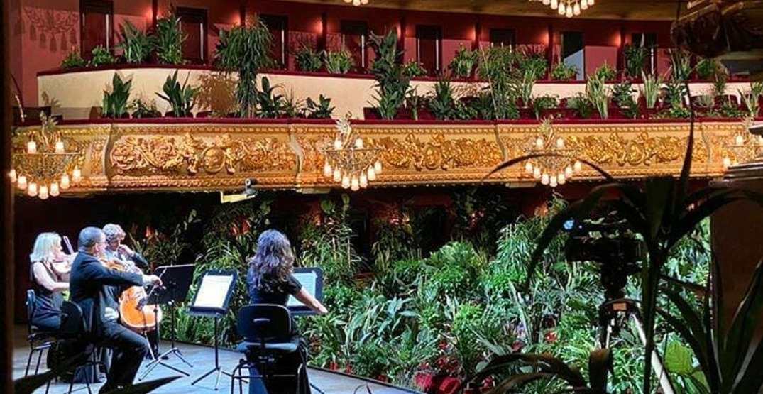 String quartet plays concert for audience of plants in Barcelona (VIDEO)