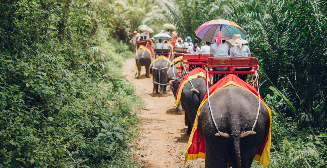 Devastating video shows crucial need to end elephant training for tourism