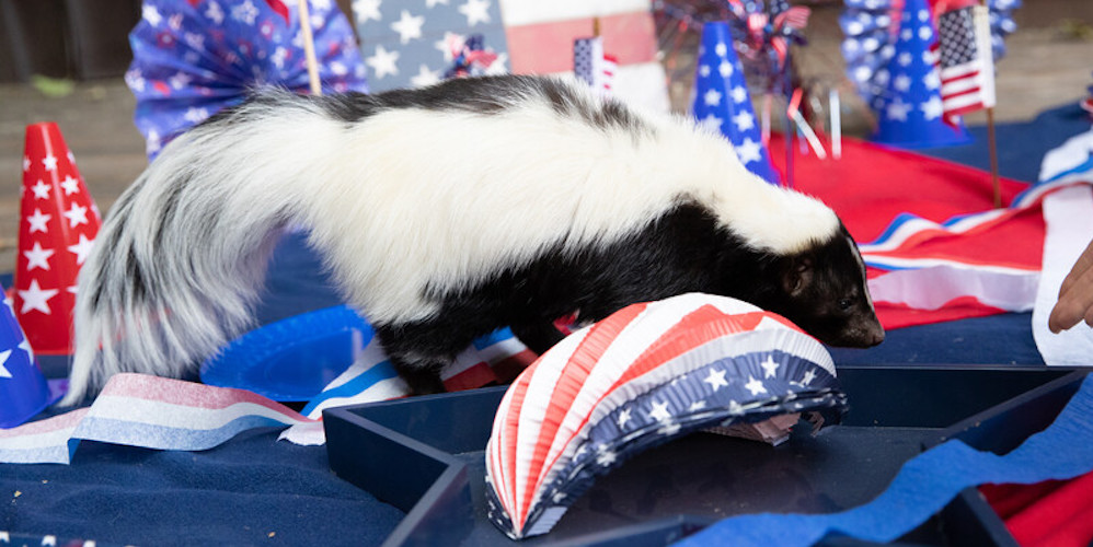 Woodland Park Zoo's animals are wishing you a happy Fourth of July (VIDEO)