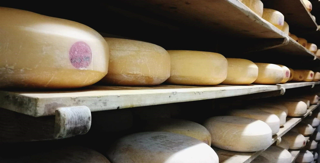 You can visit an artisan cheese farm in BC's Fraser Valley this summer