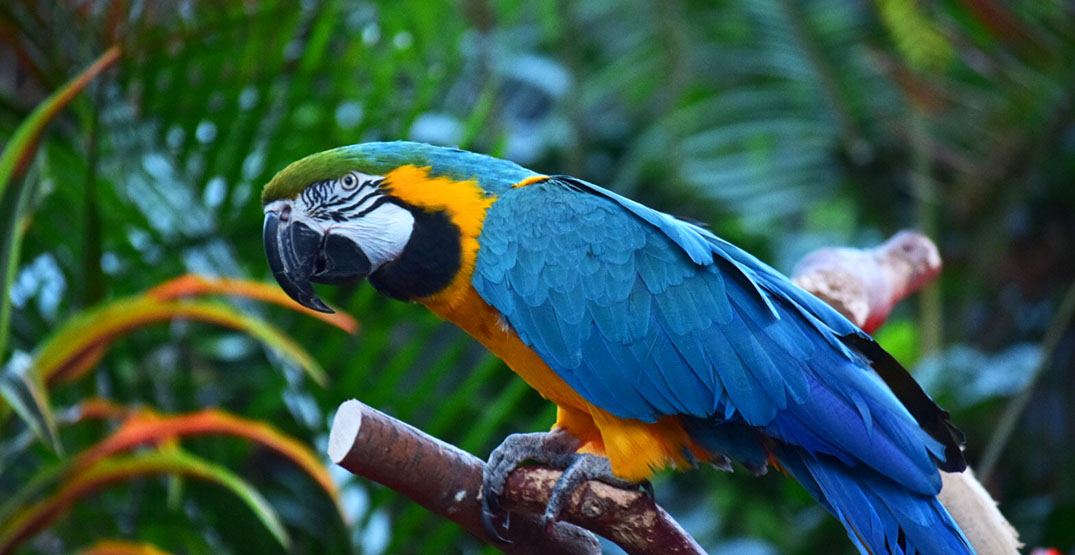 Vancouver's Bloedel Conservatory is reopening next week