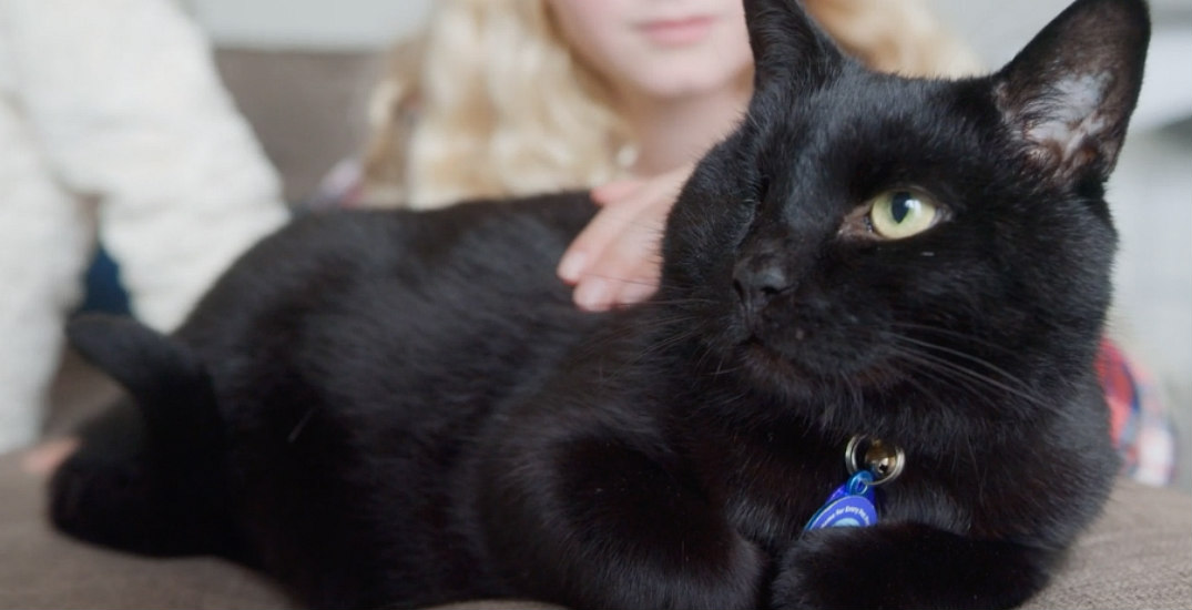 Watch this one-eyed cat find his forever home (VIDEO)
