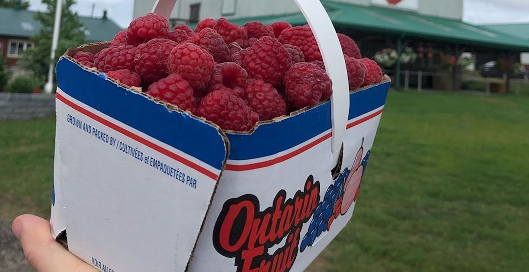 The must-visit farms for raspberry picking near Toronto right now