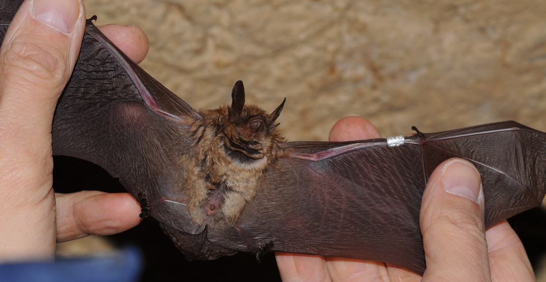 A rabid bat was spotted on a Seattle sidewalk this week