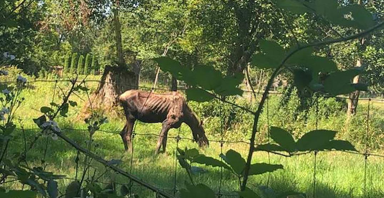 moose vancouver zoo