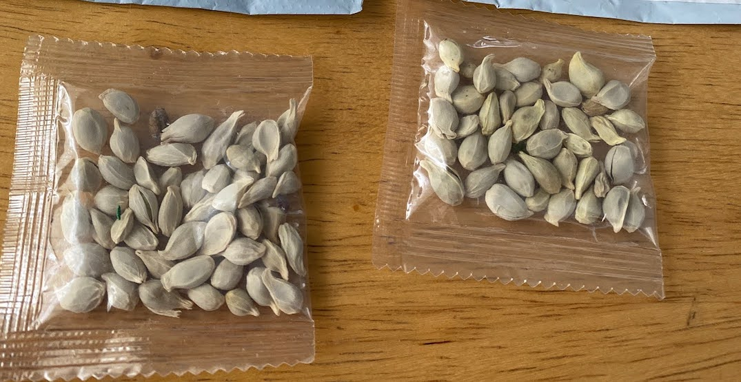 Washingtonians are being sent unknown seeds from China (PHOTO)