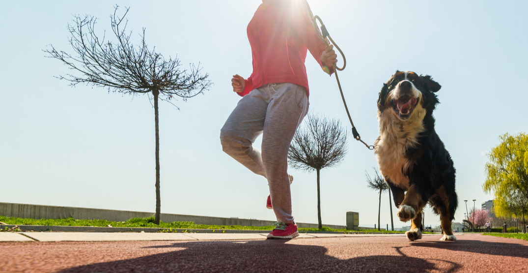 A massive run for pet lovers is going virtual this fall