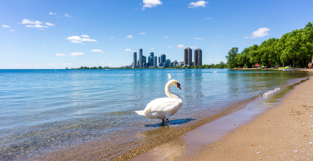 Toronto beach unsafe for swimming due to high E. coli levels