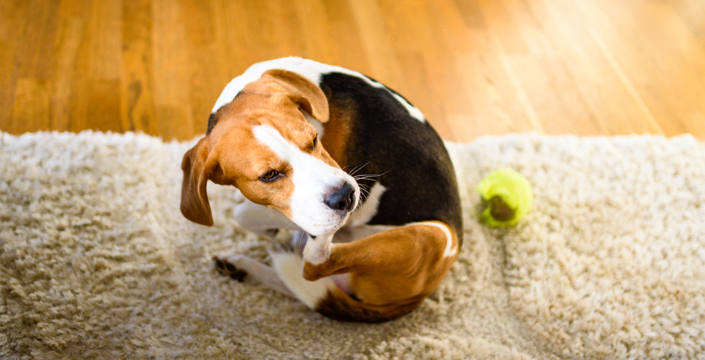 8 signs your pet's itching is more serious than you think