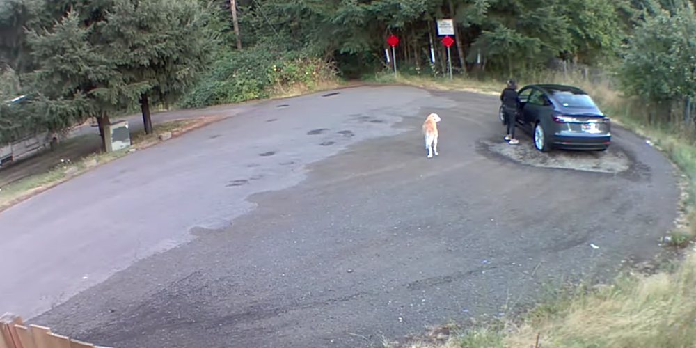 Rescue group searching for woman who allegedly abandoned dog in Washington park (VIDEO)