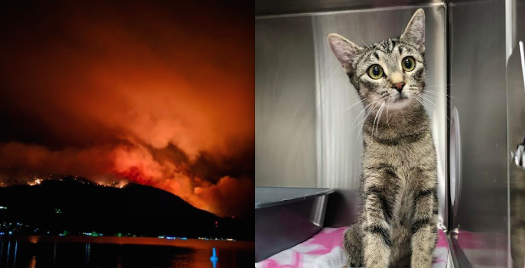 BC SPCA relocating animals due to wildfires in southern Okanagan