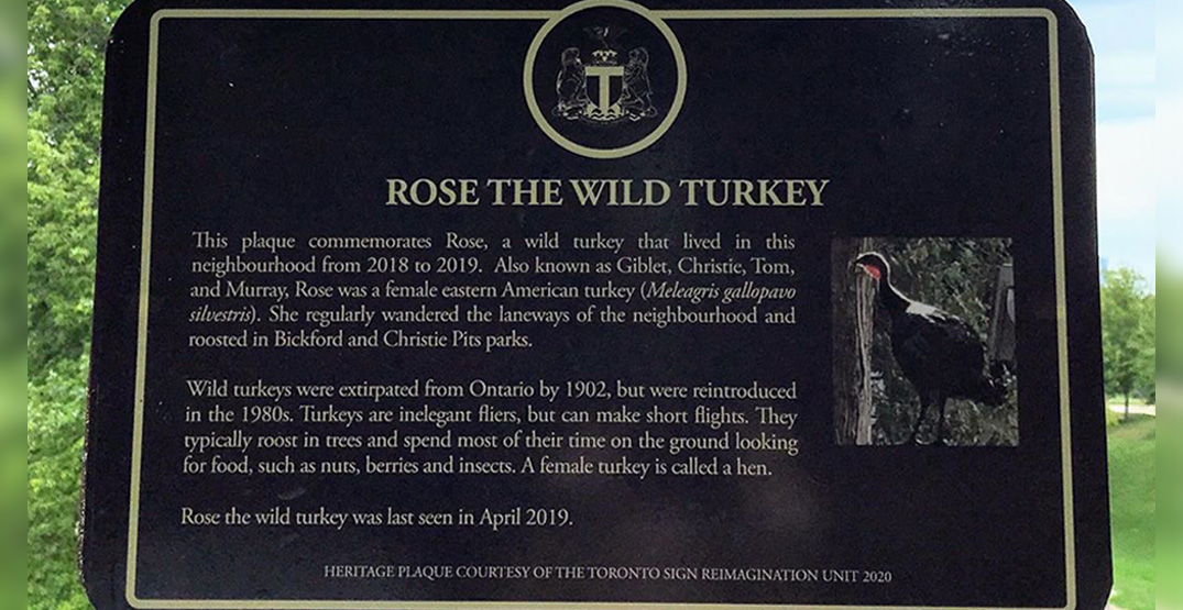Fake heritage sign erected in homage to the wild turkey of Christie Pits