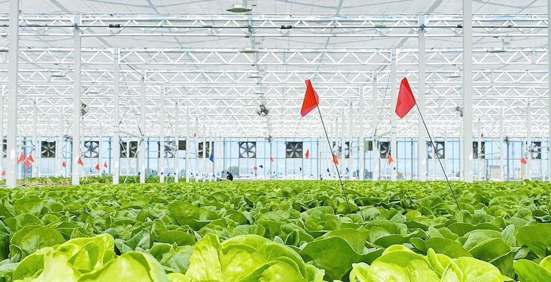 The world's largest rooftop greenhouse just opened in Montreal