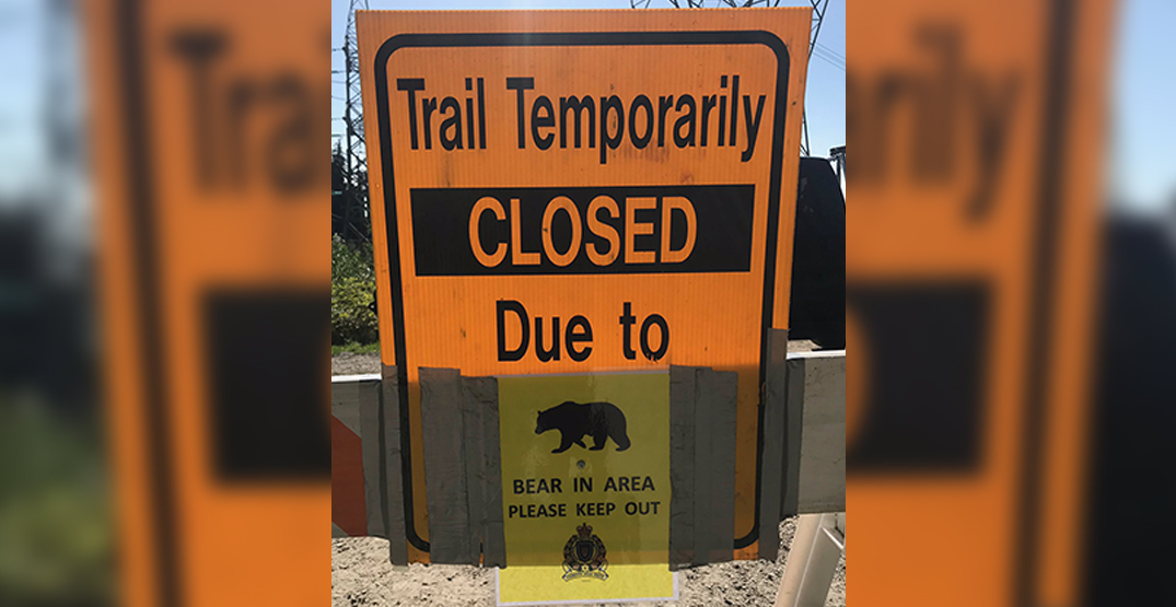 Portion of Coquitlam Crunch trail closed after bear swats woman in the leg