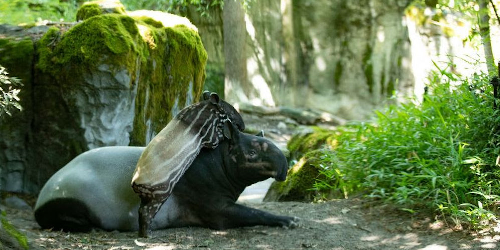 The Woodland Park Zoo is shifting to reduced opening hours on September 8