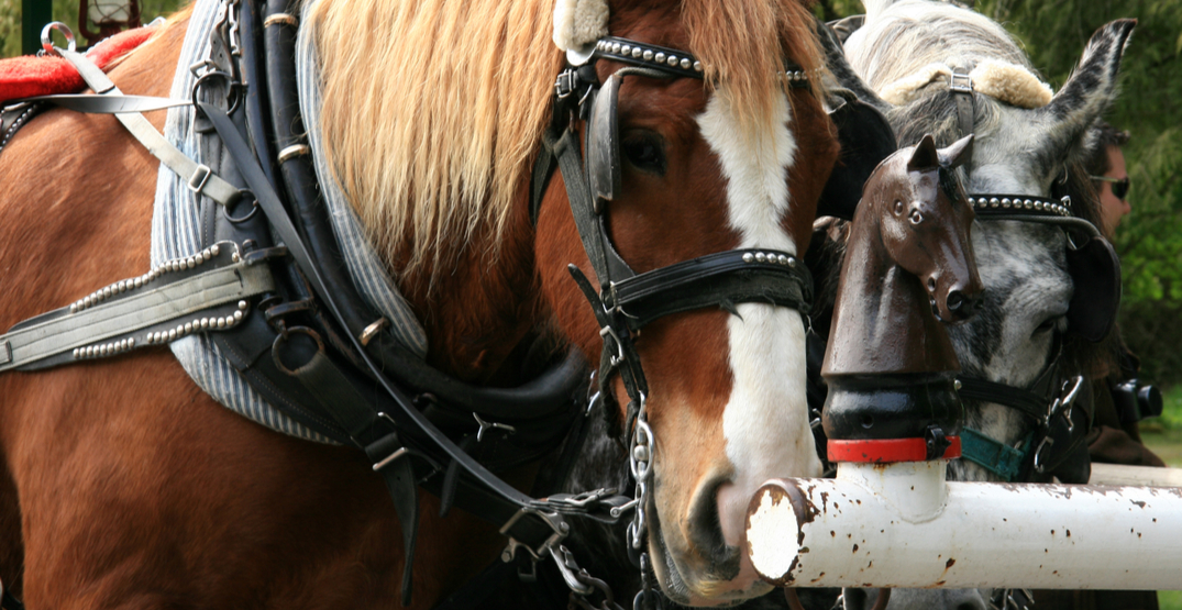 Petition seeks to end horse-drawn trolley in Stanley Park
