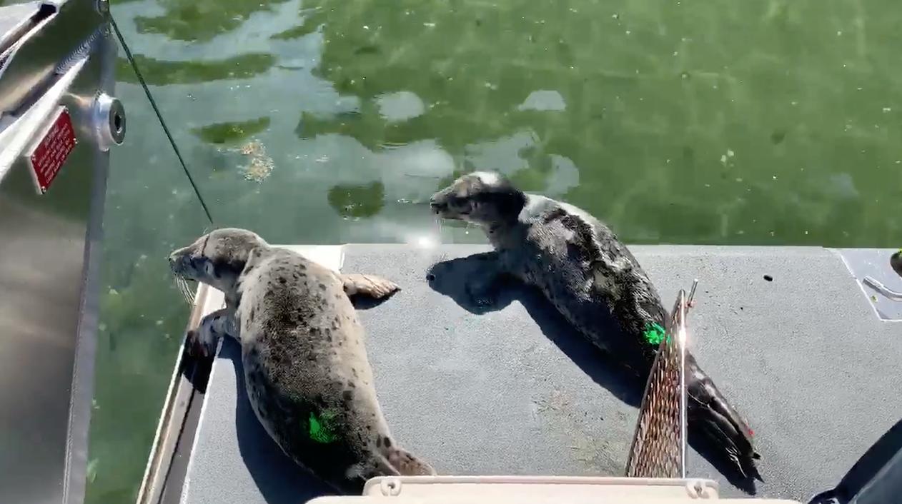 Seattle Seals