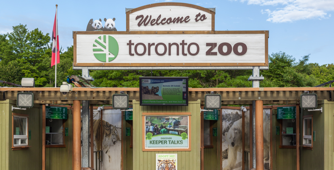 Toronto Zoo is hosting a local vendors marketplace until next month
