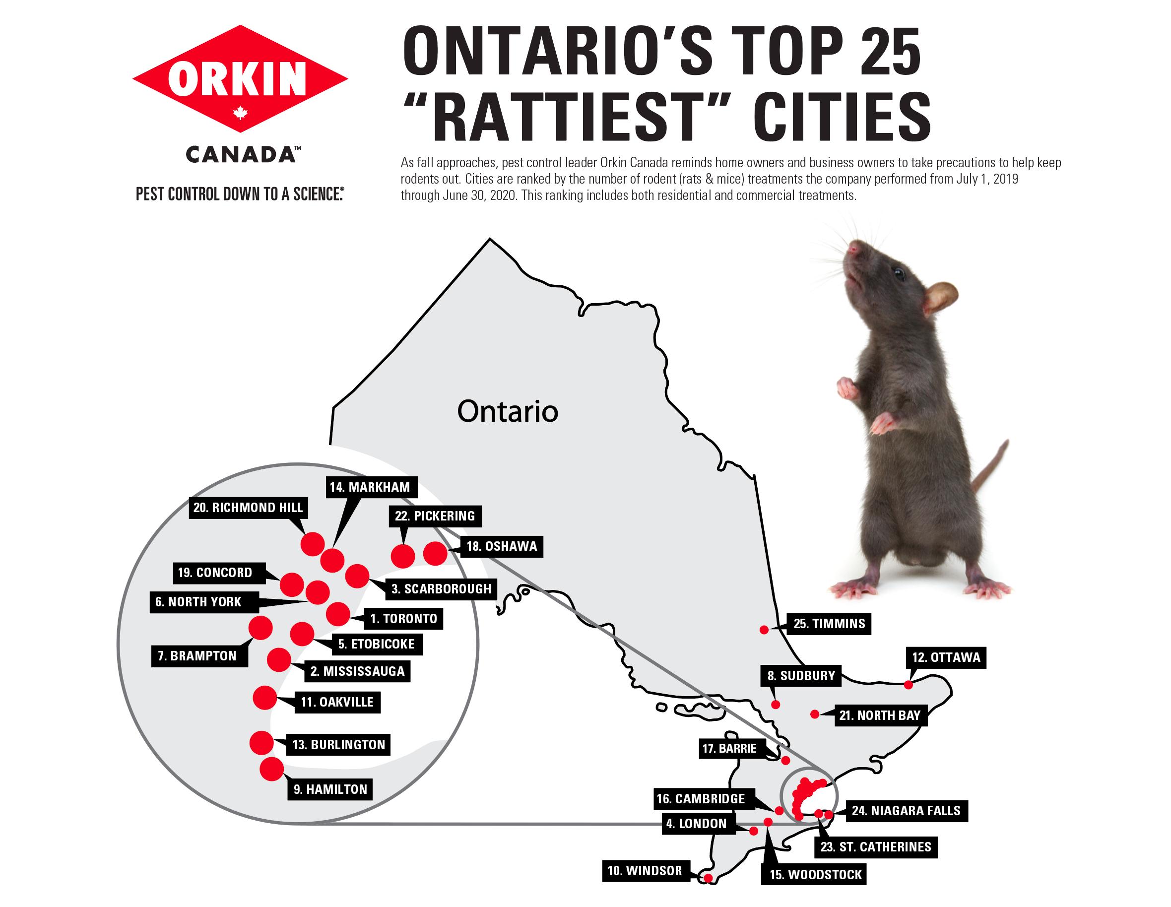 Toronto rats
