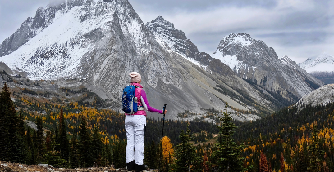 Alberta's Larches are just beginning to turn a gorgeous yellow (PHOTOS)