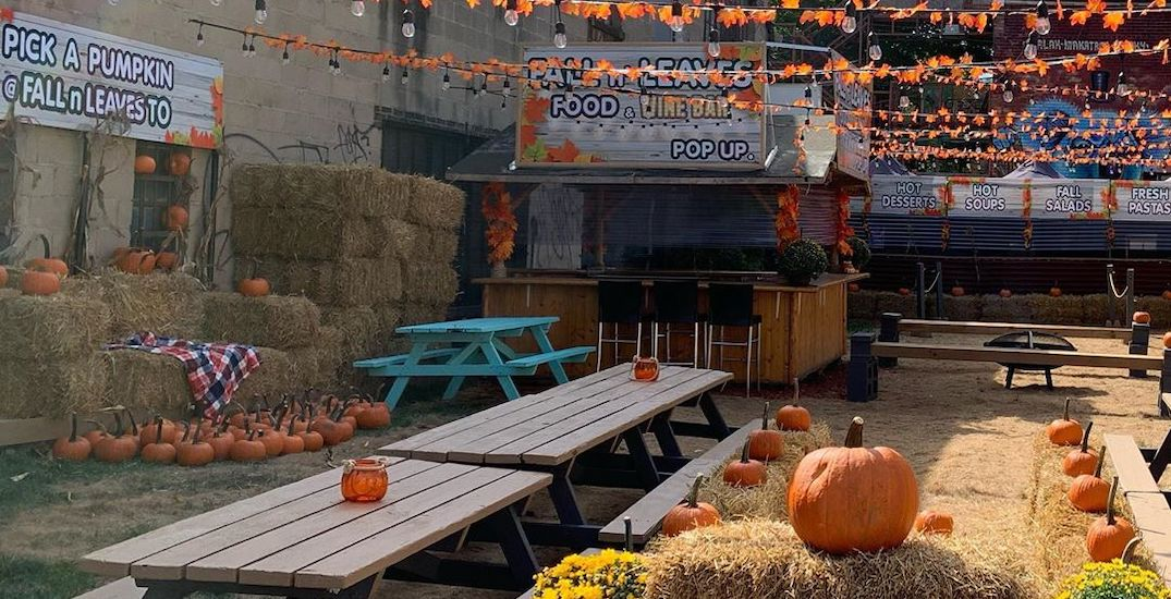 A mini pumpkin-patch pop-up is coming to Toronto next week