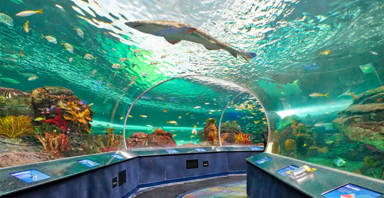Two employees at Ripley's Aquarium test positive for coronavirus