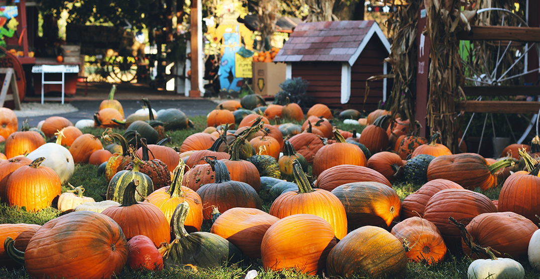 14 pumpkin patches near Vancouver you can visit this fall