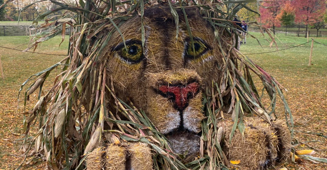 There's a Hay-lloween Town at the Toronto Zoo this month