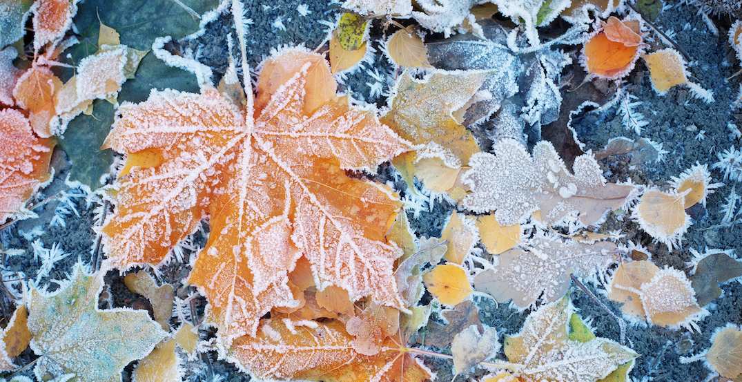 Environment Canada issues frost advisory for Montreal