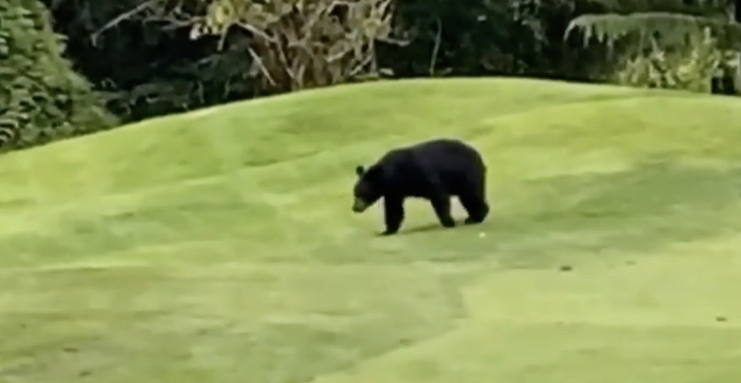 Riverdale actor Casey Cott posts bear sighting in Vancouver (VIDEO)