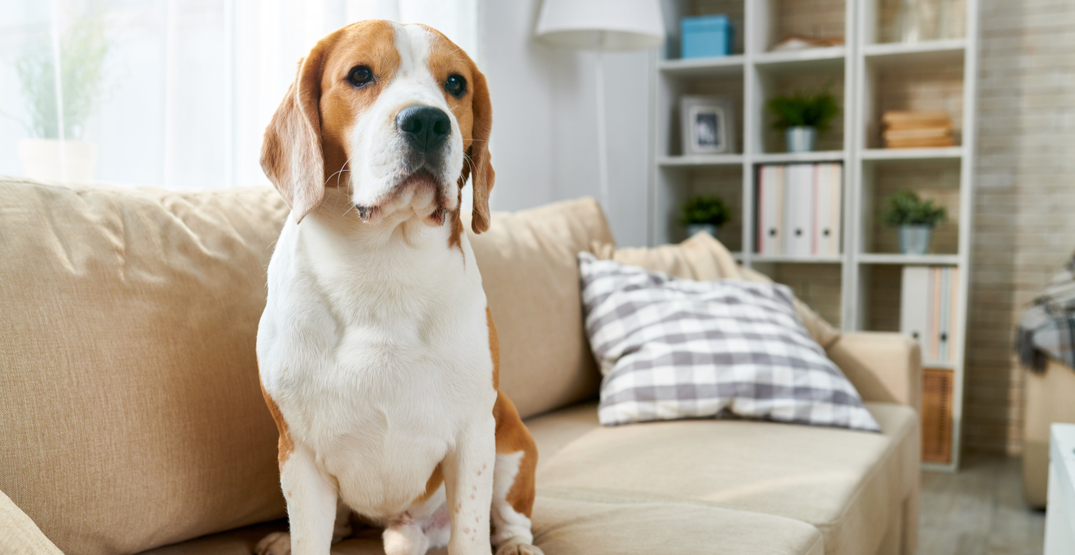 """Vancouver City Council passes motion calling to end """"no pets"""" rental rules"""
