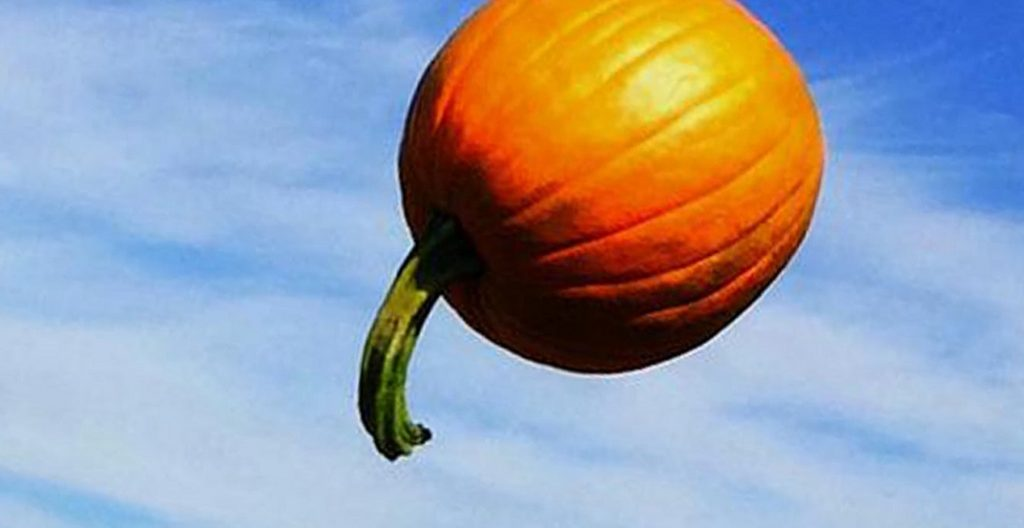 Telus Spark Pumpkin catapult
