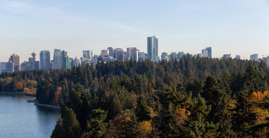 Stanley Park's tree cover has rebounded since 2006 windstorm: report