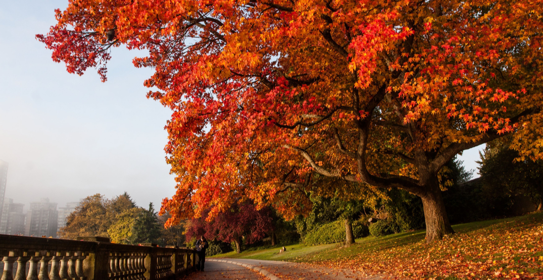 27 photos that perfectly capture Vancouver's fall colours