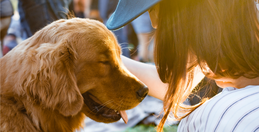 Here's how to pick out affordable nutritious pet food, according to a vet