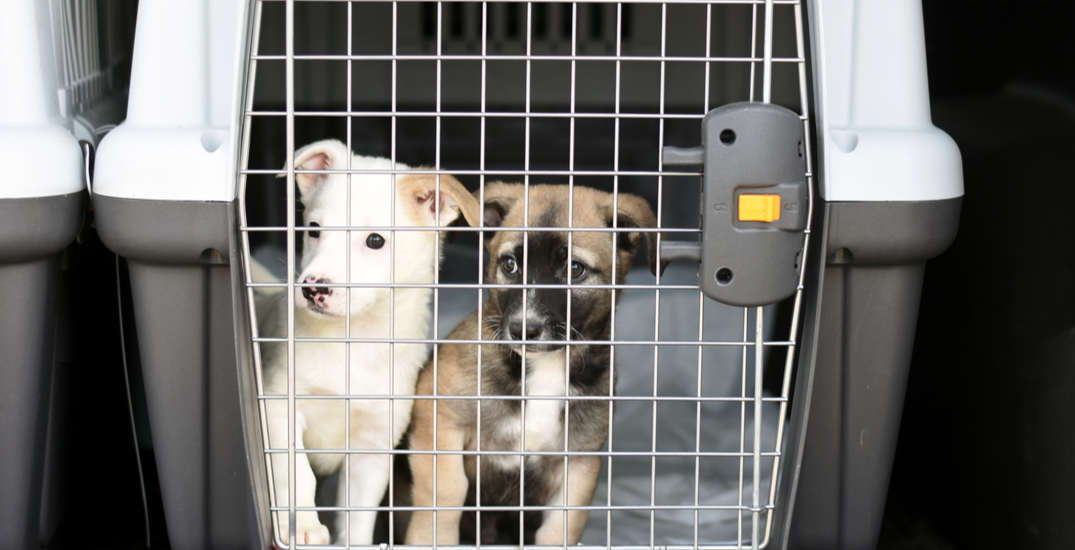 """Over 600 animals just landed in Seattle looking for their """"furever"""" families"""