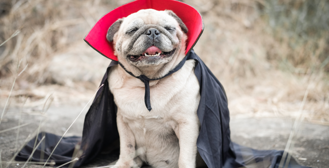 Trick-or-treat with your puppy friends in Yaletown this weekend