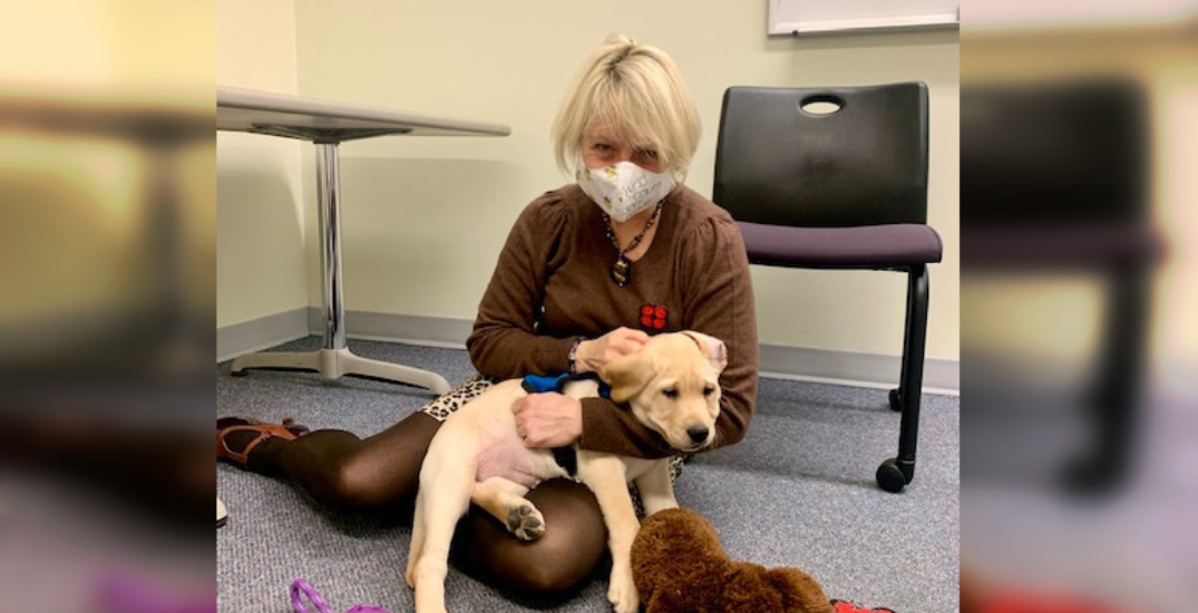 Dr. Bonnie Henry finally met one of the guide dogs named after her (VIDEO)