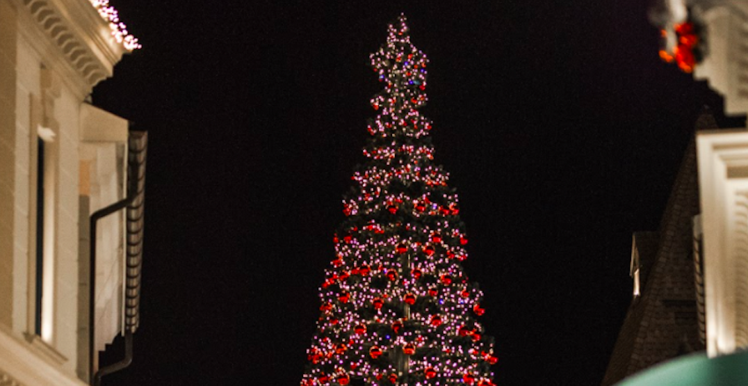 This massive Christmas tree will be on display in Metro Vancouver (PHOTOS)