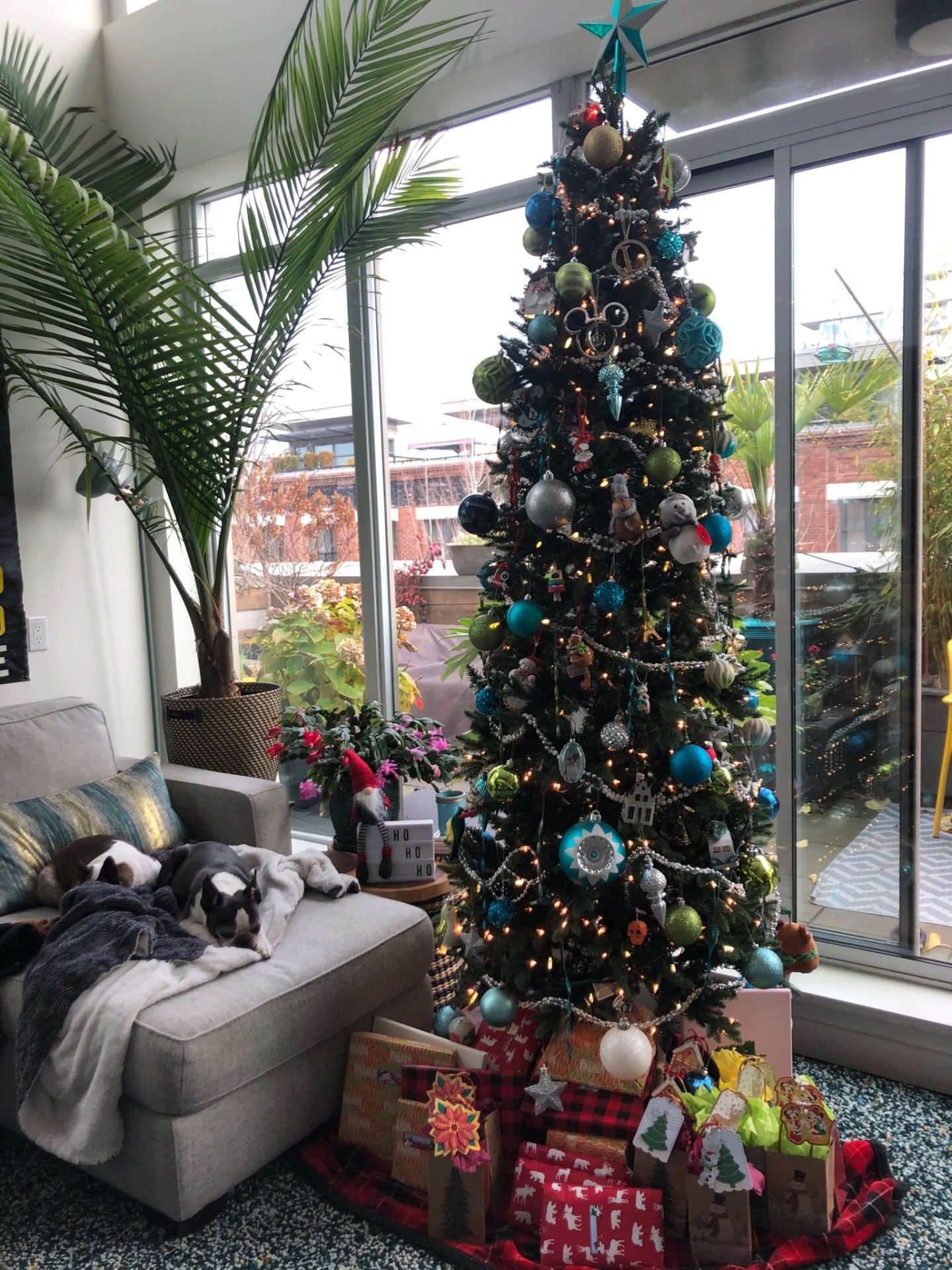 Christmas tree ann luu