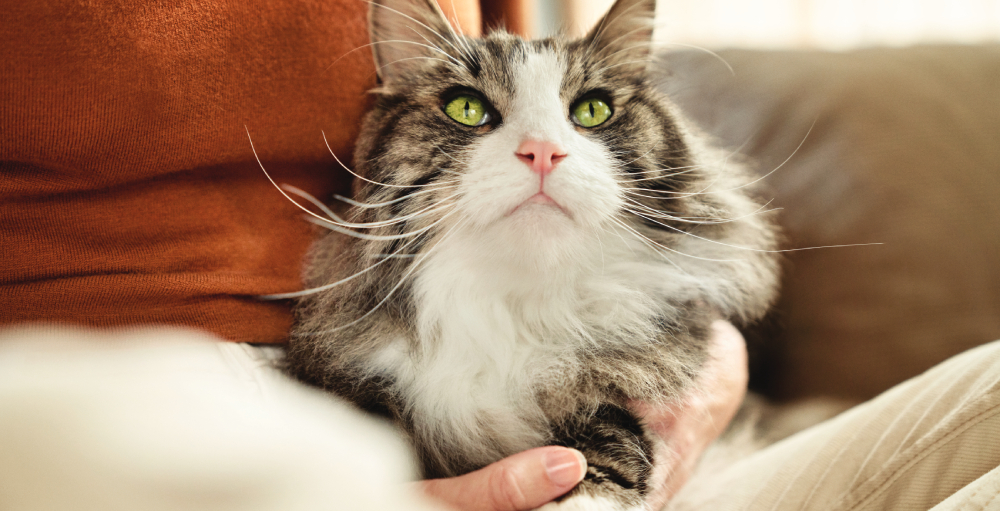 5 ways to reduce cat allergens in your home