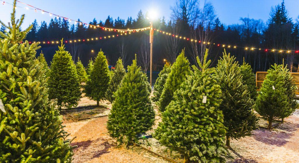 Markham Christmas